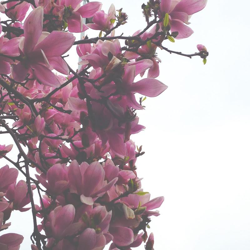 Pink Flowers di Eliiii