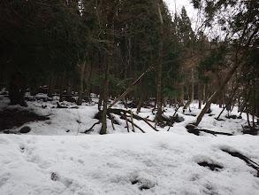 林道が現れ