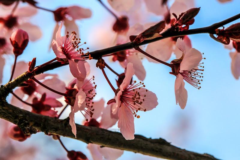 Primavera... di ScrofaniRosaria