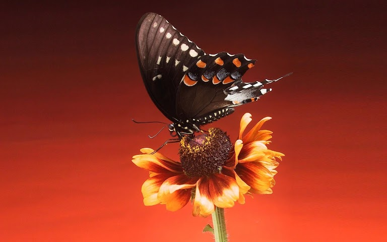 android Best Butterfly Wallpapers Screenshot 5