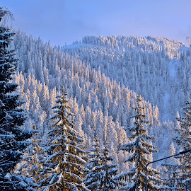 Blanc de Roumanie by Ciprian Apetrei - Landscapes Forests ( carapati mountains, snow, winter, romania, landscape )