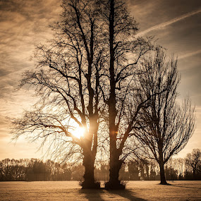 Winter Frost Sunrise by Phil Clarkstone - Nature Up Close Trees & Bushes