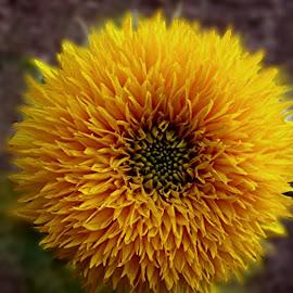 by Ghazala .S. Mujtaba - Flowers Single Flower