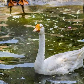 by Uday Shankar - Animals Birds