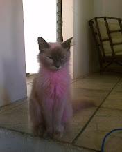 Photo: minha gata:Hachna