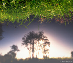 Photo: When The Sky Is Green  Sorry I am going play with your minds a little and your perspective too, I saw the tree's reflected on the water and I liked it, I also liked the grass and the small droplets of dew hanging on, I also liked the image more when I flipped it ;)