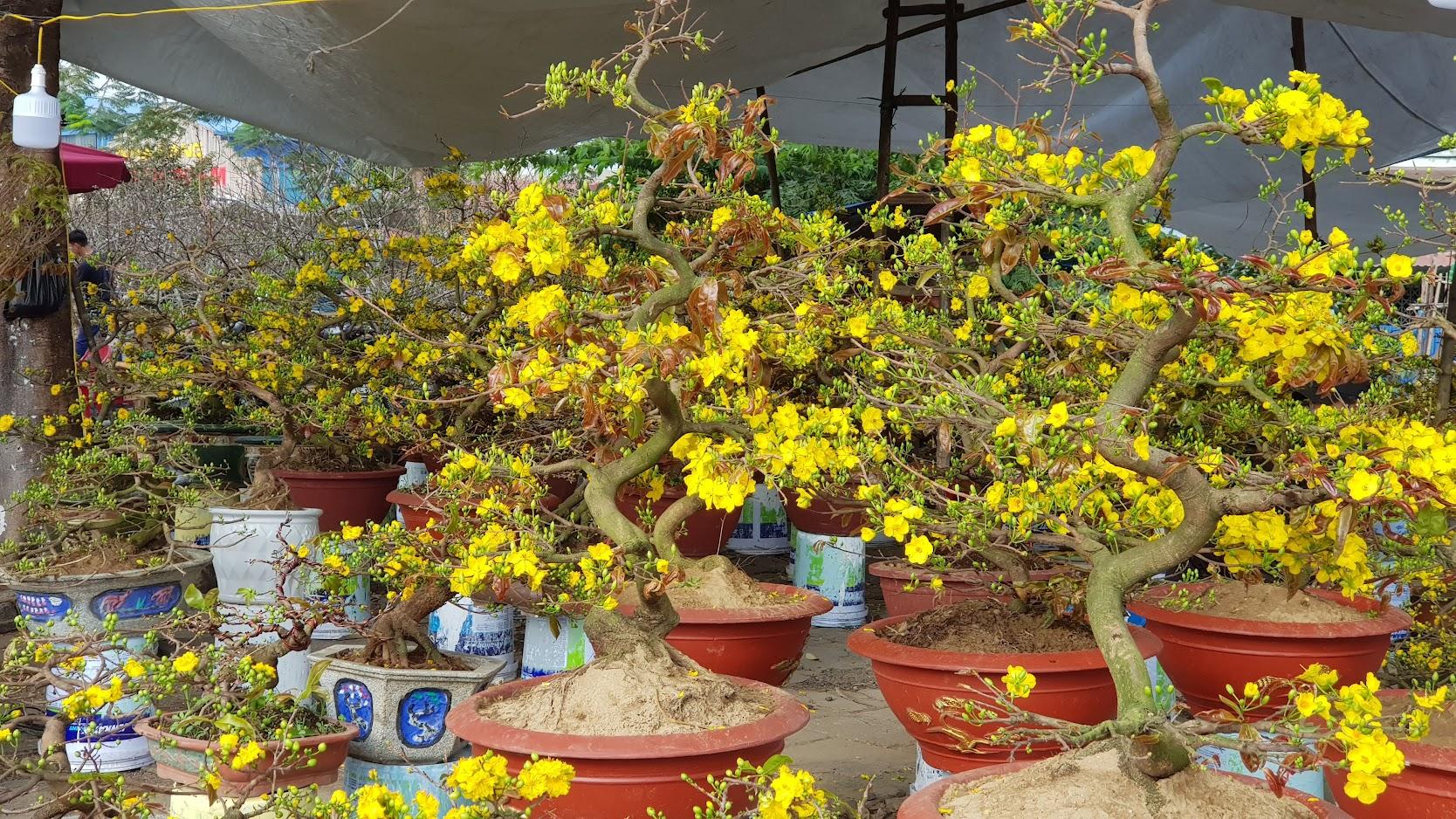 Chợ hoa Tết 2020 đường Lê Hồng Phong ở Hải Phòng 11
