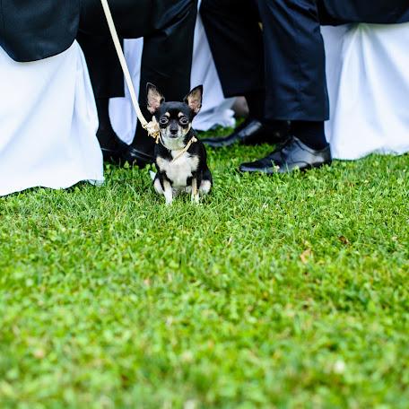 Wedding photographer Emanuele Capoferri (capoferri). Photo of 27.07.2017