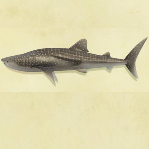 森 釣り 方 ジンベイザメ あつ