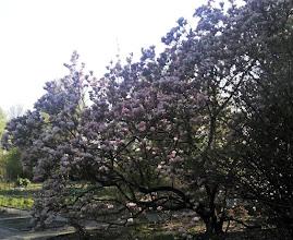 Photo: F4233558 w Ogrodzie Botanicznym