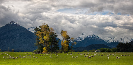 """Photo: Sheep on the way to Paradise - Glenorchy, New Zealand -   This title makes it sounds a bit like they are about to be slaughtered...  or maybe they are suicide-sheep, about to meet some sweet sweet virgin sheep in paradise.  But no, this is not what I mean.  There is a little town past Glenorchy, New Zealand called """"Paradise"""".  I passed these sheep while on the way there.  I never made it to Paradise, truthfully.  I turned around.  It felt like such a long way to get here, and I had to turn around to get back to Queenstown before it got too late. - Read more at www.stuckincustoms.com"""