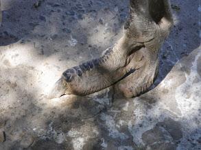 Photo: Ostrich foot