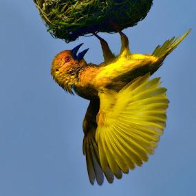 fo()d,FoOd,f0Od! by Fanie Weldhagen - Animals Birds