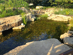 Photo: Acorn Ponds & Waterfalls, we install ponds, #WaterFeatures and low maintenance water gardens. Renovation and maintenance are our specialties. Check out our website www.acornponds.com and give us a call 585.442.6373.   To learn more about Pond installations please click here: www.acornponds.com/ponds.html  One year later!! Ecosystem #Pond Filtration: the water travels down to this area where it is skimmed and stored deep underground ( which cools it). The water is then pumped up to a Wetland Filter where the Waterfall begins.   To see more of our #pondinstallations on Facebook click here: www.facebook.com/media/set/?set=a.464911070212687.94604.103109283059536&type=3  Find us on Houzz here: www.houzz.com/pro/acornlandscapedesign/acorn-landscaping-and-ponds-llc  Click here for a free Magazine all about Ponds and Water Features: http://flip.it/gsrNN  To learn more about Pond Construction please click here: www.acornponds.com/pond-construction.html  Sign up for your personal design consultation here: www.acornponds.com/contact-us.html  Acorn Ponds & Waterfalls   585.442.6373 www.acornponds.com