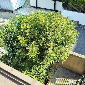 2階窓から届きそうな、植木を見下ろす