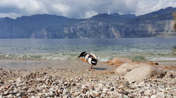 Lago di Garda di KrissPad
