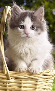 Unduh 100+  Gambar Kucing Lucu Wallpaper Kucing Lucu Terbaru Gratis