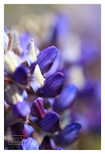 Photo: Eastern Sierras-20120717-667