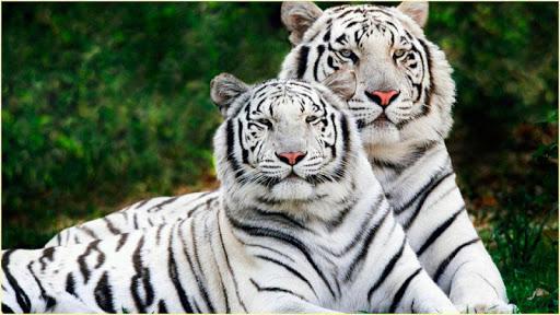 HD 놀라운 동물