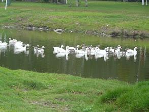 Photo: Die park is op 'n plasie suid van Oos Londen,  langs 'n klein standhoudende rivier.
