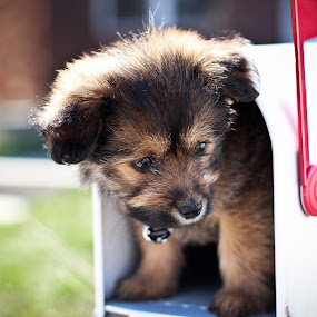 Special Delivery by Eric Bott - Animals - Dogs Portraits ( puppy, dog, mailbox )