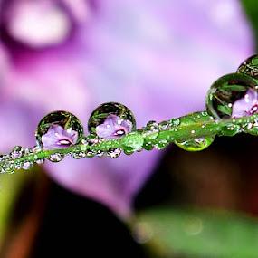 by Vina Kurniawati - Nature Up Close Flowers - 2011-2013