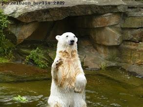Photo: Knut ist soweit - kann losgehen ;-)
