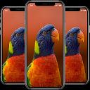 Parrot Wallpaper APK