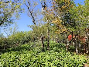バイケイソウが生い茂る(右から進む)