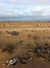 Photo: Dead in the desert, but not of thirst...