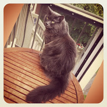 Photo: Very nice cat fur (a friend's cat) #cat #cats #pet #pets #hair #fur #intercer #catlover #catstagram #catoftheday - via Instagram, http://instagr.am/p/MliGGPpfsU/