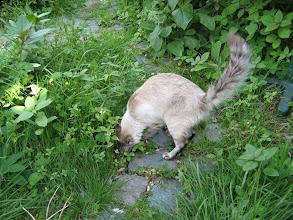 Photo: Heerlijk scharrelen in de tuin