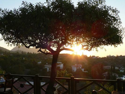 Ulivo al tramonto di chris78