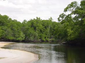 Photo: The Satilla River. The Great Satilla Preserve has over five miles of frontage here.