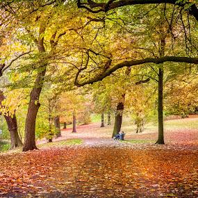 Autumn  by Anita  Christine - City,  Street & Park  City Parks ( citypark, orange, red, season, autumn, green, bremen, trees, germany, yellow,  )