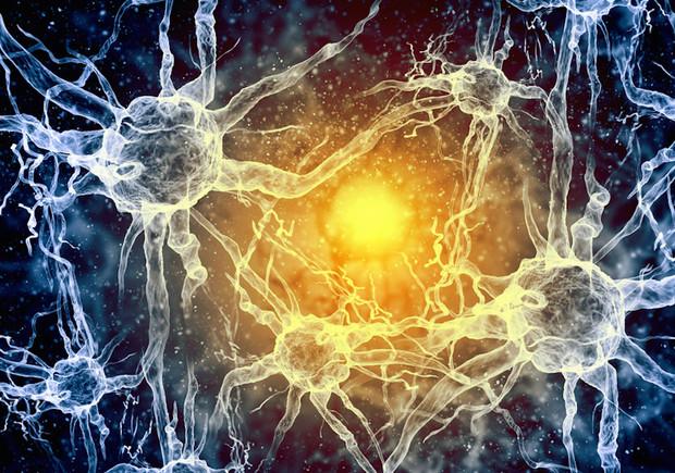 Cellules espéria