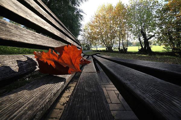 l'eco delle foglie morte di roberto-copeta