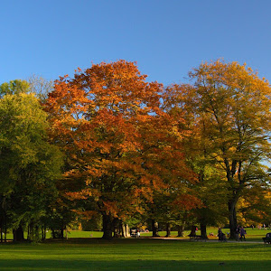 C:\Documents and Settings\shongololo\My Documents\My Pictures\Picasa\Exports\AUTUMN 2012\Trees in the park.jpg