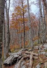 Photo: Jesen je odavno ovdje