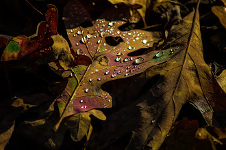 Photo: Raindrops  #365project curated by +Simon Davis-Oakley+Patricia dos Santos Patonand +Vesna Krnjic