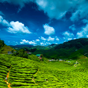 cameron highland malaysia by Chairelgibrant Othman - Landscapes Mountains & Hills