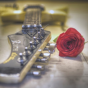 For my Love by AsDigiClicks Photography - Wedding Reception ( love, rose, boston, wedding, wedding photographer, asdigiclicks )