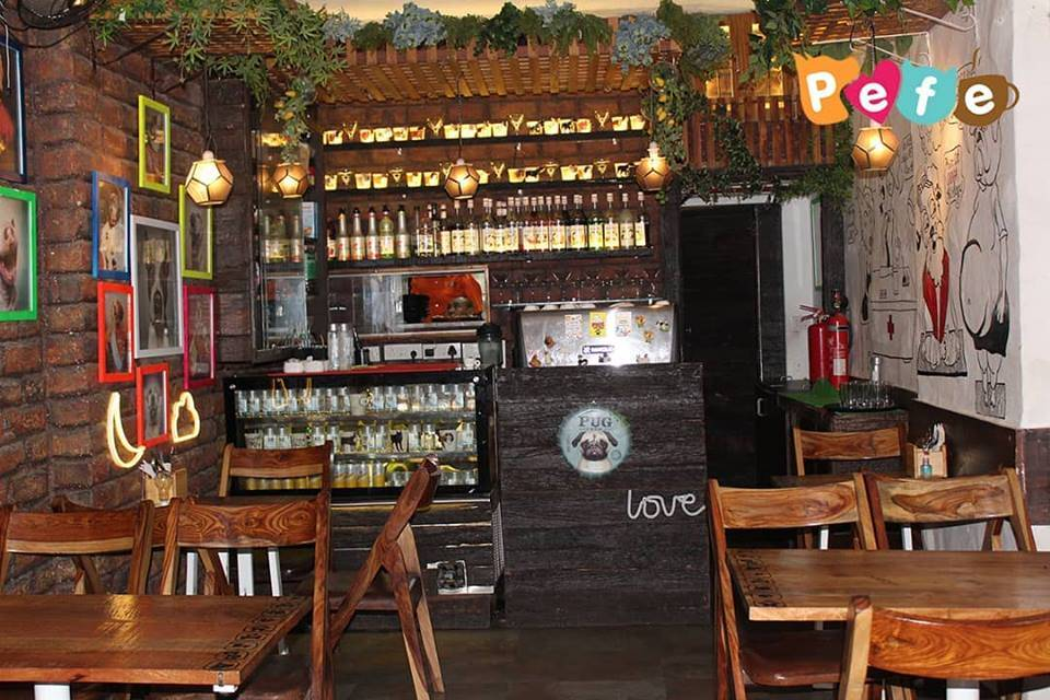pefe-the-pet-cafe-best-places-to-visit-in-mumbai_image