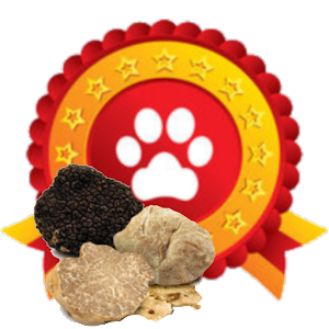 addestramento cani da tartufo perugia italy - photo#32