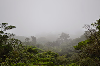 Photo: Selvatura hanging bridges in the Monteverede Cloud Forest
