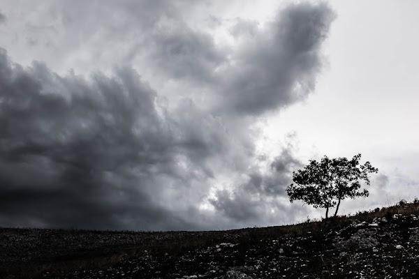 Albero e nuvole di Dario Lo Presti