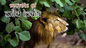 Secrets of Wild India thumbnail