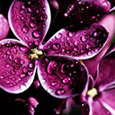 Purple Wallpapers Theme Purple New Tab