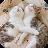 AppLock Theme Cute Cat