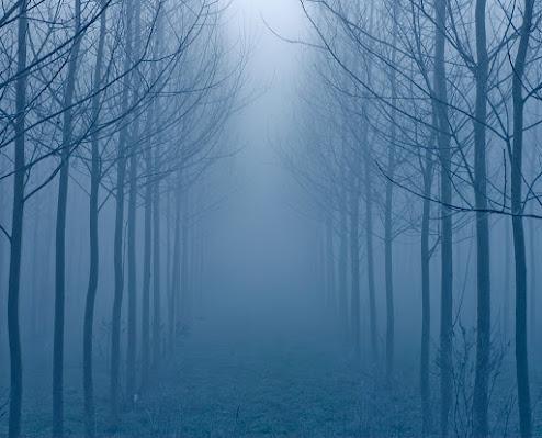 Perdersi nella Nebbia di RobertaSilvestro